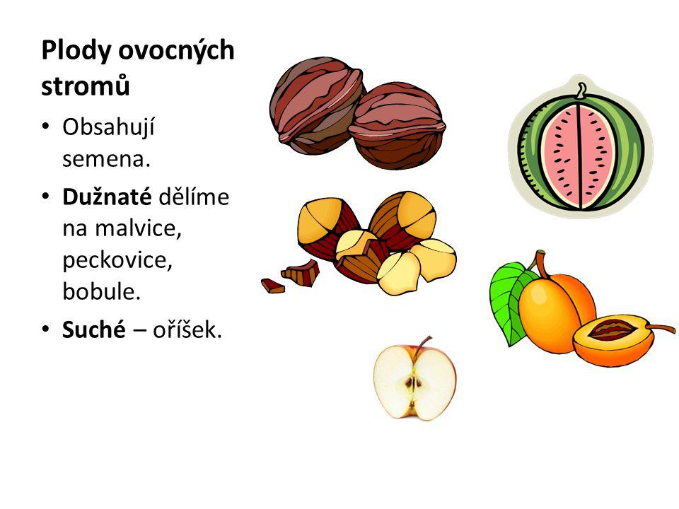 Plody ovocných stromů Obsahují semena. Dužnaté dělíme na malvice, peckovice, bobule. Suché – oříšek.