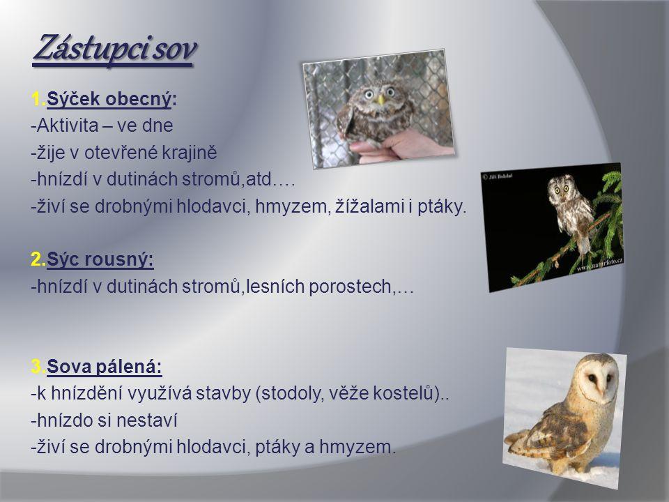 Zástupci sov 1.Sýček obecný: -Aktivita – ve dne -žije v otevřené krajině -hnízdí v dutinách stromů,atd…. -živí se drobnými hlodavci, hmyzem, žížalami