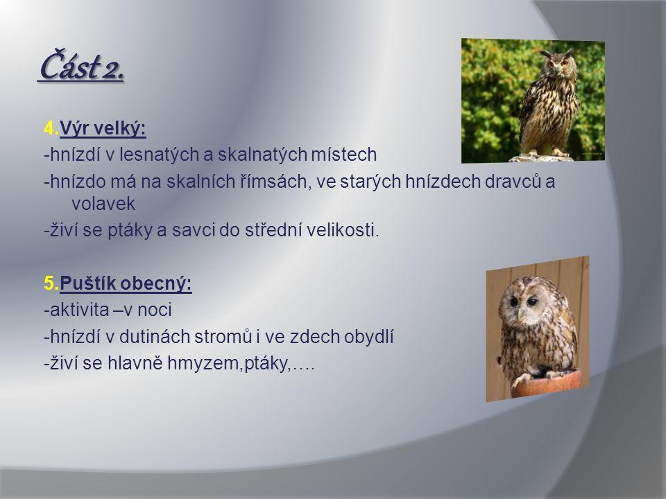 Část 2. 4.Výr velký: -hnízdí v lesnatých a skalnatých místech -hnízdo má na skalních římsách, ve starých hnízdech dravců a volavek -živí se ptáky a sa
