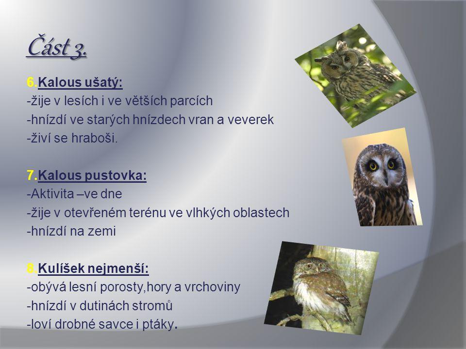 Část 3. 6.Kalous ušatý: -žije v lesích i ve větších parcích -hnízdí ve starých hnízdech vran a veverek -živí se hraboši. 7.Kalous pustovka: -Aktivita