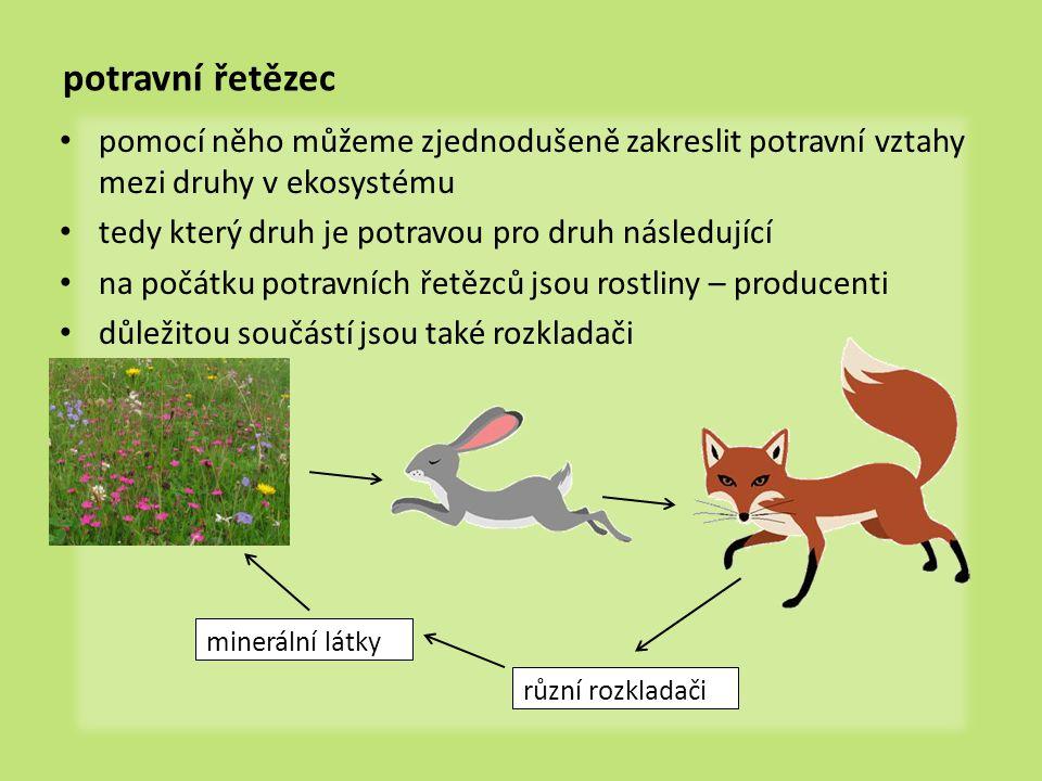 potravní řetězec pomocí něho můžeme zjednodušeně zakreslit potravní vztahy mezi druhy v ekosystému tedy který druh je potravou pro druh následující na