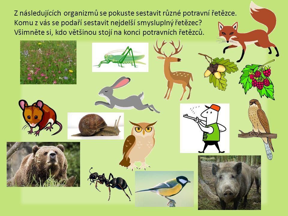 Z následujících organizmů se pokuste sestavit různé potravní řetězce. Komu z vás se podaří sestavit nejdelší smysluplný řetězec? Všimněte si, kdo větš