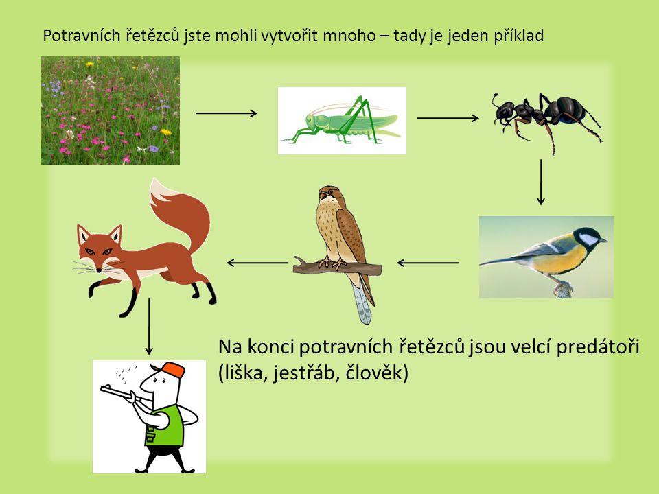 Na konci potravních řetězců jsou velcí predátoři (liška, jestřáb, člověk) Potravních řetězců jste mohli vytvořit mnoho – tady je jeden příklad