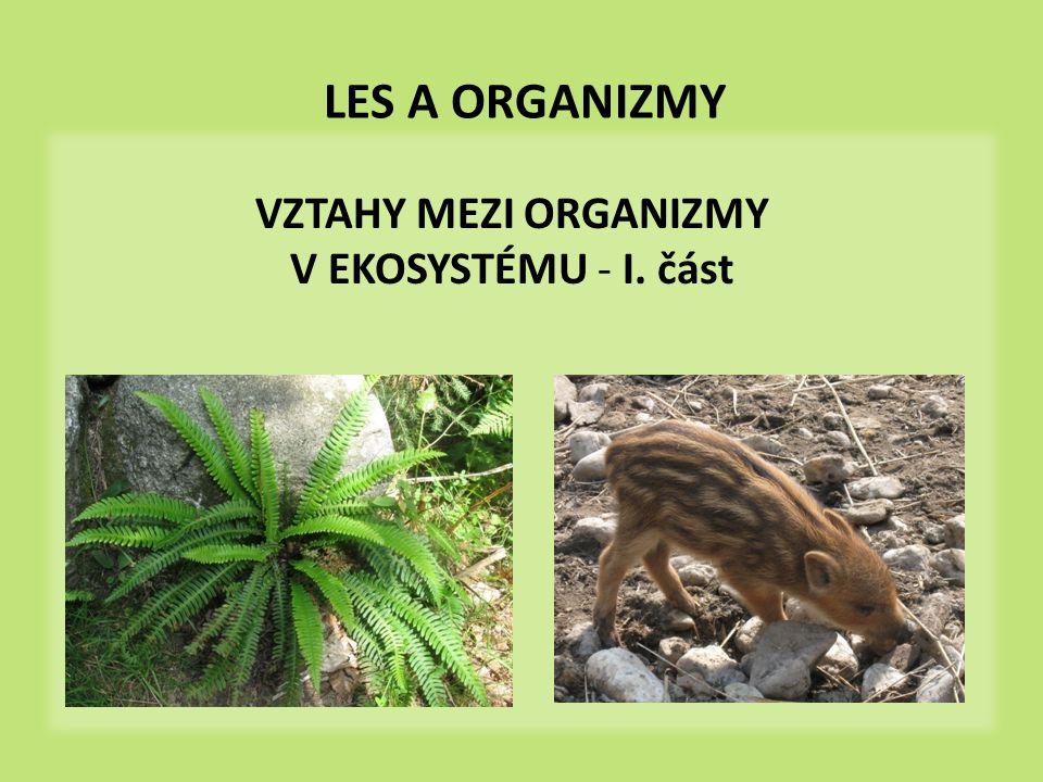 les je životním prostředím pro mnoho organizmů – rostliny, živočichové, houby, mikroorganizmy mezi nimi různé, často velmi složité vzájemné vztahy nejčastějším vztahem – vztah predátor – kořist - 1 organizmus je potravou jiného - můžeme zakreslit pomocí potravních řetězců les a organizmy