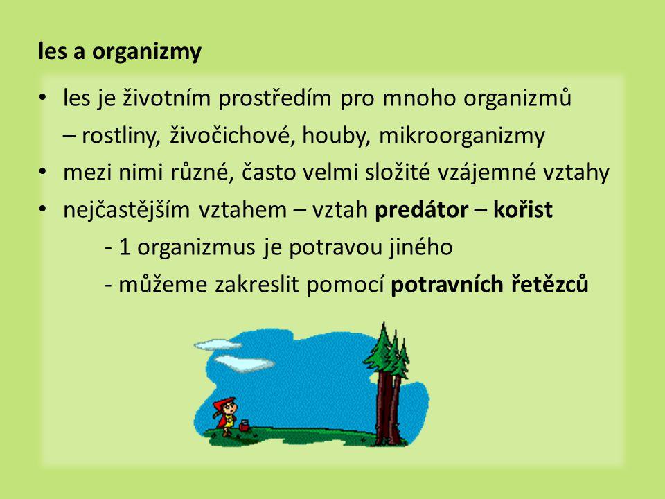 zelené rostliny stojí na počátku potravních řetězců říkáme jim producenti – dokážou si sami vytvořit (produkovat) ústrojné (organické) látky provádí fotosyntézu  Co je to fotosyntéza.