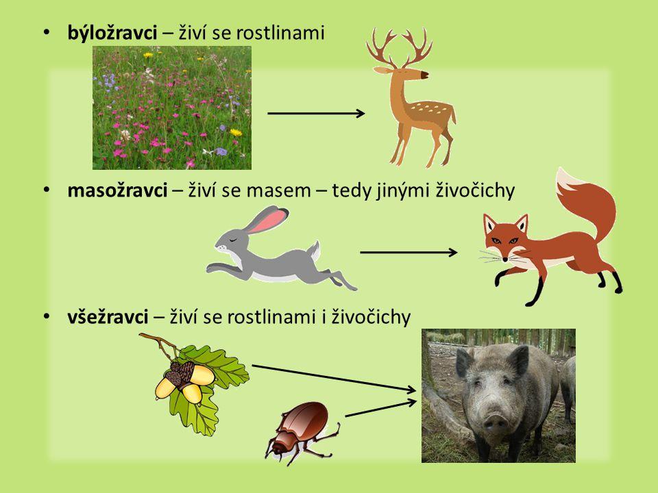 býložravci – živí se rostlinami masožravci – živí se masem – tedy jinými živočichy všežravci – živí se rostlinami i živočichy