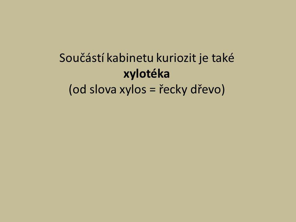 Součástí kabinetu kuriozit je také xylotéka (od slova xylos = řecky dřevo)