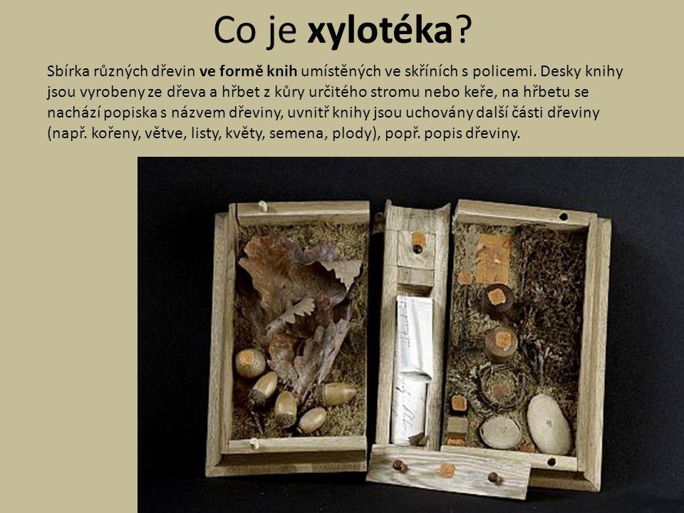 Co je xylotéka? Sbírka různých dřevin ve formě knih umístěných ve skříních s policemi. Desky knihy jsou vyrobeny ze dřeva a hřbet z kůry určitého stro