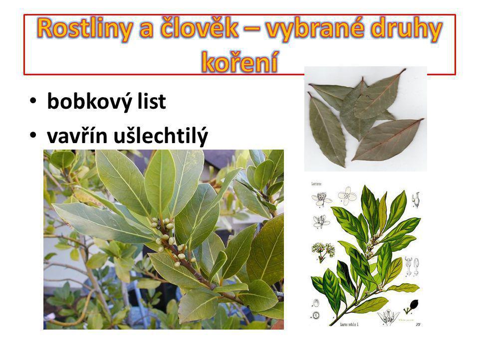 Koření – kapara Rostlina poskytující koření - kapara trnitá Využívaná část - květ - poupata