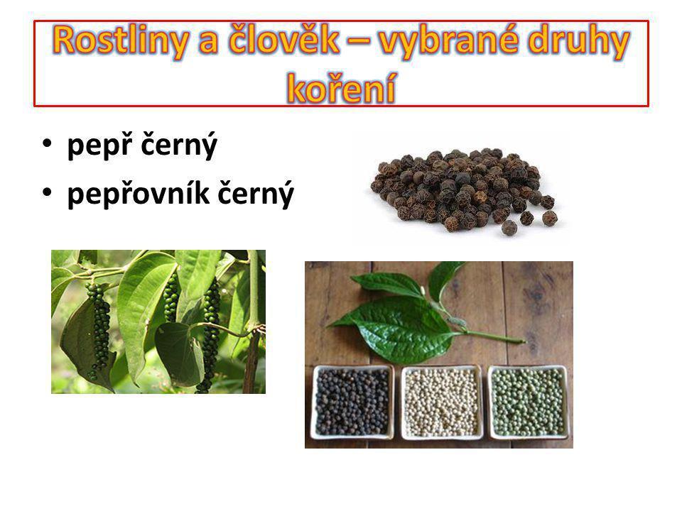Koření – nové koření Rostlina poskytující koření - pimentovník lékařský Využívaná část – plody - bobule