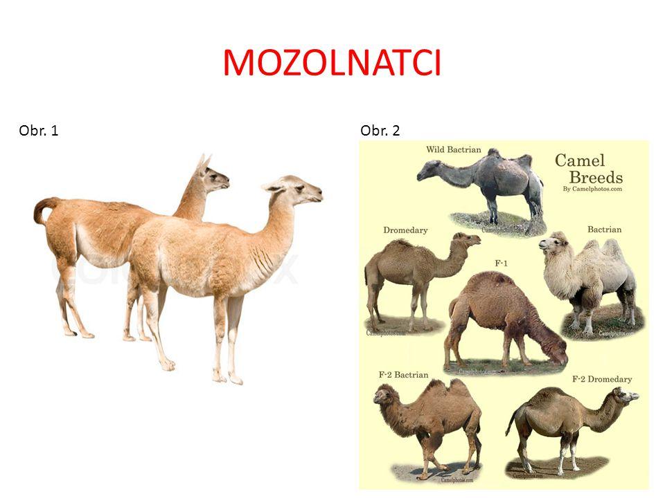 MOZOLNATCI Obr. 1 Obr. 2