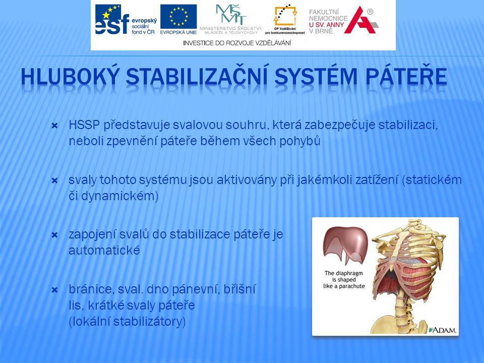  HSSP představuje svalovou souhru, která zabezpečuje stabilizaci, neboli zpevnění páteře během všech pohybů  svaly tohoto systému jsou aktivovány př