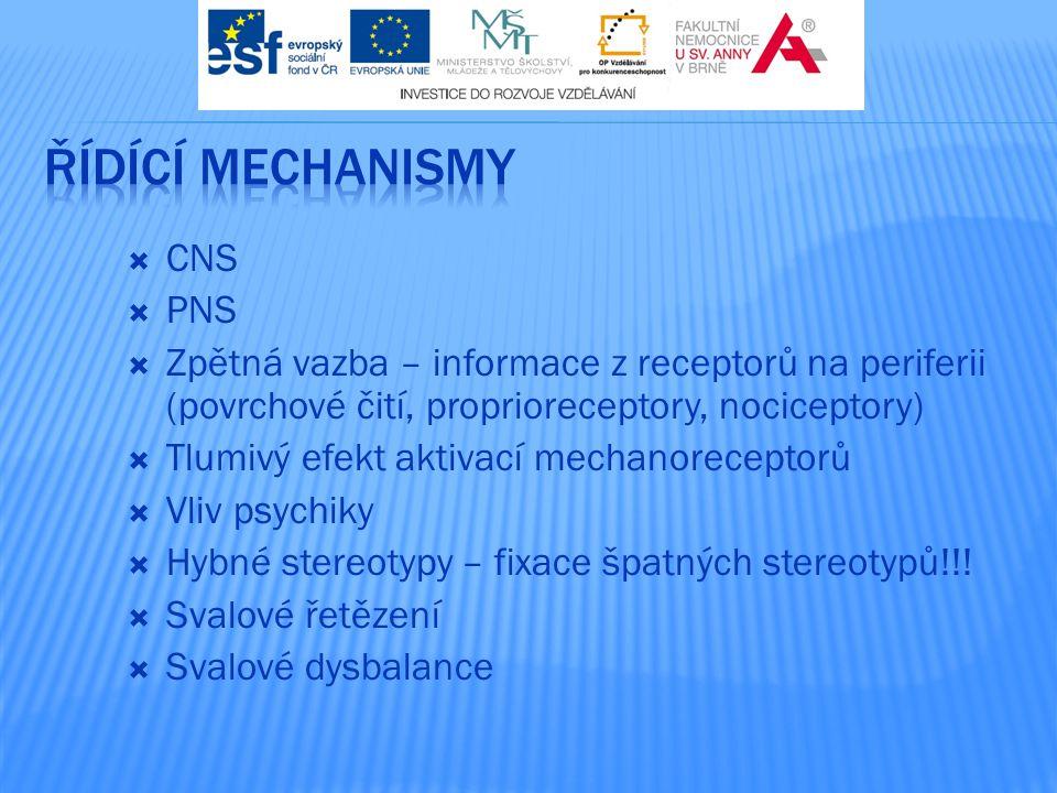  CNS  PNS  Zpětná vazba – informace z receptorů na periferii (povrchové čití, proprioreceptory, nociceptory)  Tlumivý efekt aktivací mechanorecept