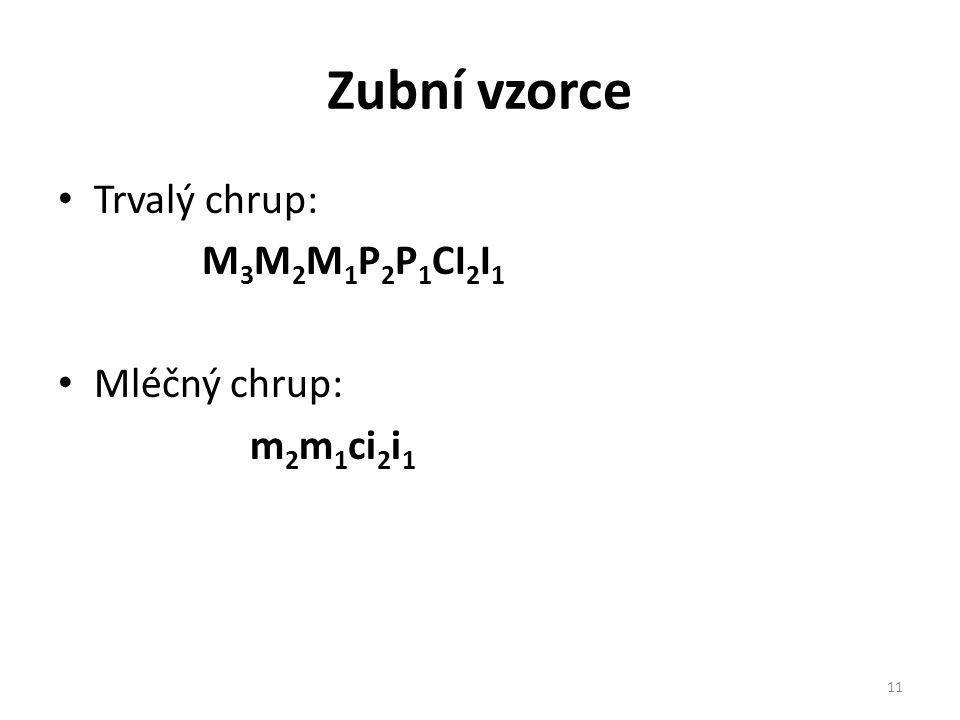 Zubní vzorce Trvalý chrup: M 3 M 2 M 1 P 2 P 1 CI 2 I 1 Mléčný chrup: m 2 m 1 ci 2 i 1 11