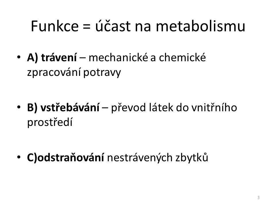 Funkce = účast na metabolismu A) trávení – mechanické a chemické zpracování potravy B) vstřebávání – převod látek do vnitřního prostředí C)odstraňován