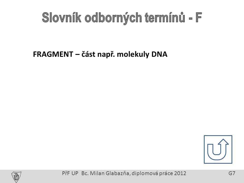 PřF UP Bc. Milan Glabazňa, diplomová práce 2012 G7 FRAGMENT – část např. molekuly DNA