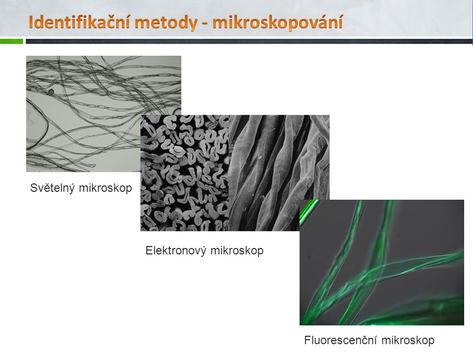 Světelný mikroskop Elektronový mikroskop Fluorescenční mikroskop