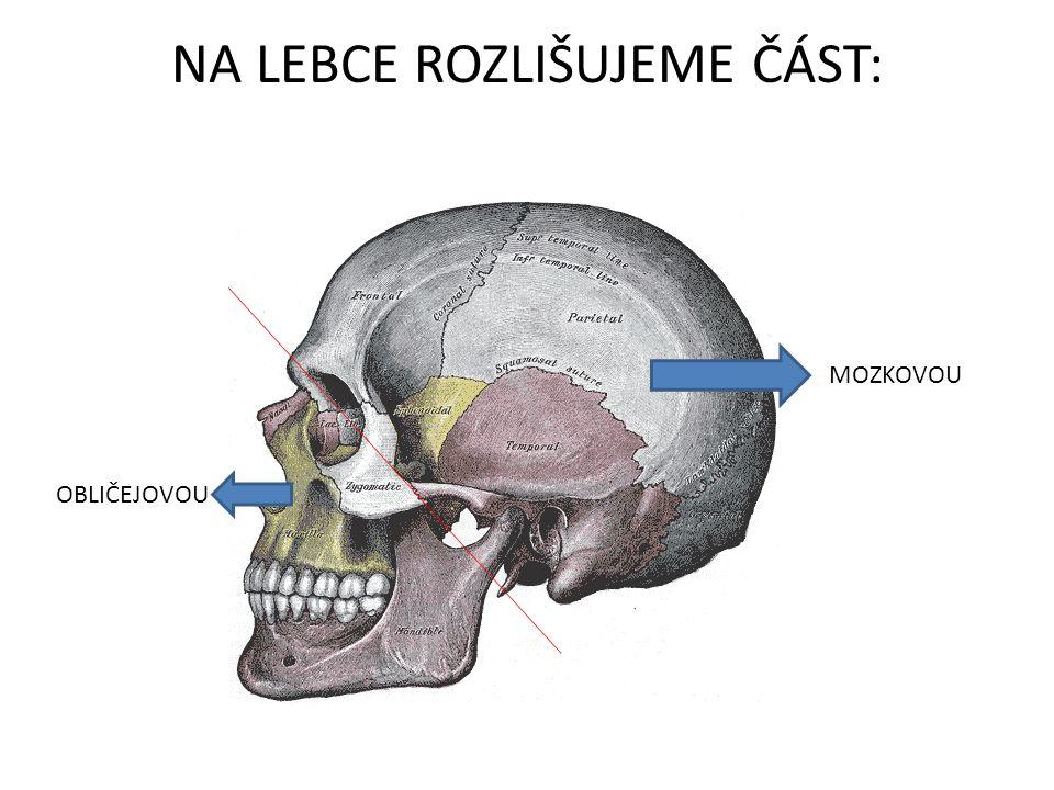 ČÁST OBLIČEJOVÁ horní čelist dolní čelist kost nosní kost slzní kost lícní