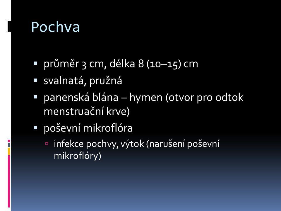 Pochva  průměr 3 cm, délka 8 (10–15) cm  svalnatá, pružná  panenská blána – hymen (otvor pro odtok menstruační krve)  poševní mikroflóra  infekce