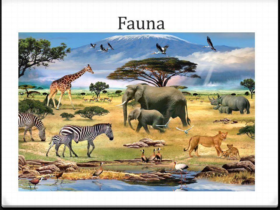 Západní Afrika 0 Západní Afrika je region na západu Afriky, do nějž se většinou řadí tyto země: Benin, Burkina Faso, Kamerun, Pobřeží slonoviny, Gambie,Ghana, Guinea, Guinea- Bissau, Libérie, Mali, Niger, Nigérie, Senegal, Sierra Leone, Togo.BeninBurkina FasoKamerunPobřeží slonovinyGambieGhanaGuineaGuinea- BissauLibérieMaliNigerNigérieSenegalSierra LeoneTogo 0 Někdy jsou k nim přiřazovány také tyto oblasti: Kapverdy, Čad, Rovníková Guinea, Gabon, Mauritánie, Svatý Tomáš a Princův ostrov aZápadní Sahara.KapverdyČadRovníková GuineaGabonMauritánieSvatý Tomáš a Princův ostrovZápadní Sahara 0 Západní Afrika je oblast, která má široké spektrum druhů oblastí, bioregionů a kultur.