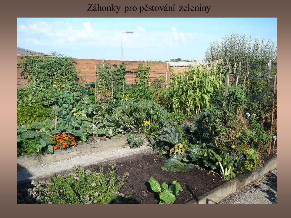 Místo před zeleninovou zahradou