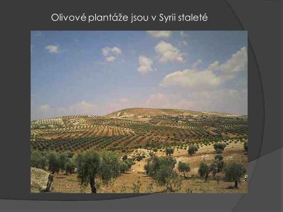 Stará část Damašku