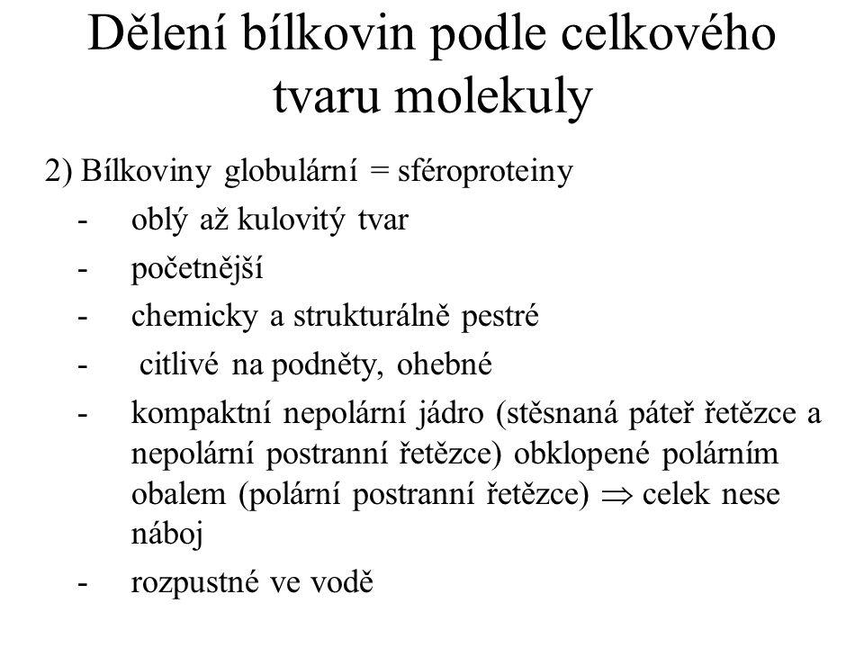 Dělení bílkovin podle celkového tvaru molekuly 2) Bílkoviny globulární = sféroproteiny -oblý až kulovitý tvar -početnější -chemicky a strukturálně pes
