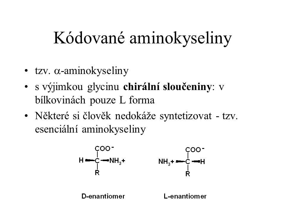 Kódované aminokyseliny tzv.  -aminokyseliny s výjimkou glycinu chirální sloučeniny: v bílkovinách pouze L forma Některé si člověk nedokáže syntetizov