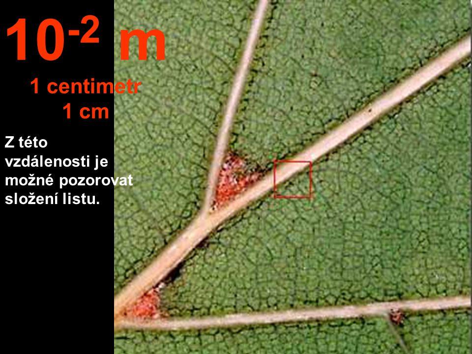 Přiblížením se na vzdálenost 1 dm, čili 10 cm, můžeme studovat detaily listu. 10 -1 m 1 decimetr