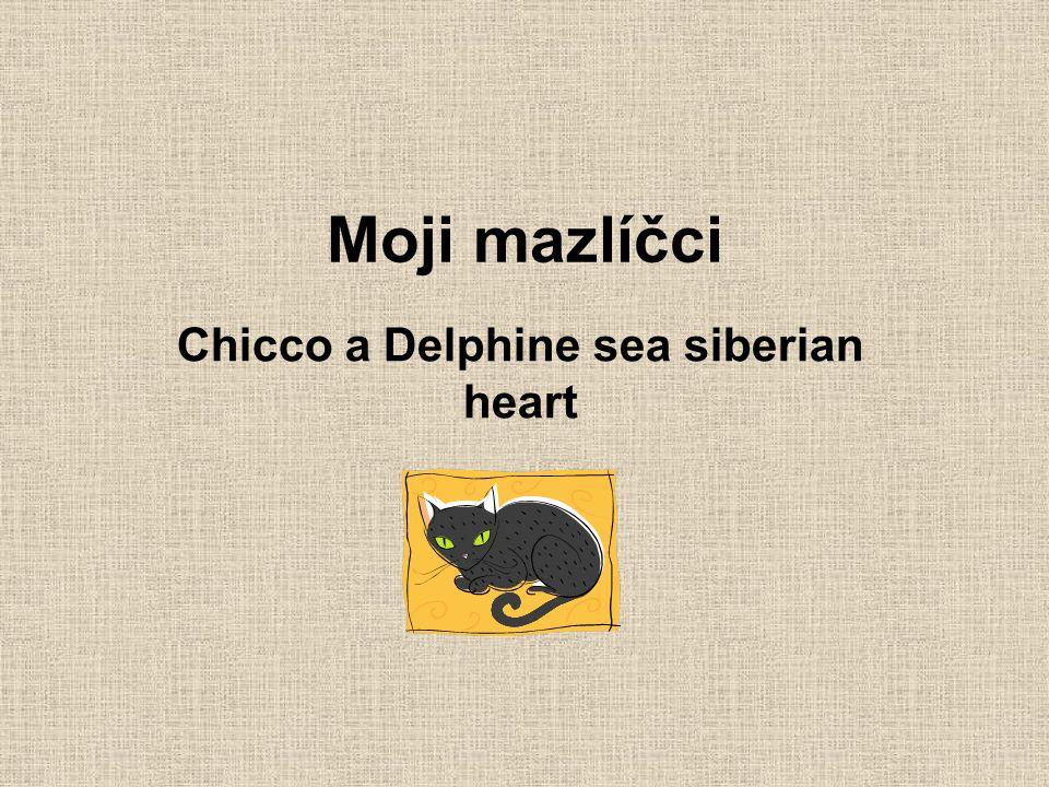 Moji mazlíčci Chicco a Delphine sea siberian heart