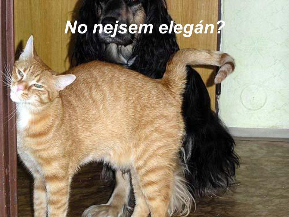 No nejsem elegán