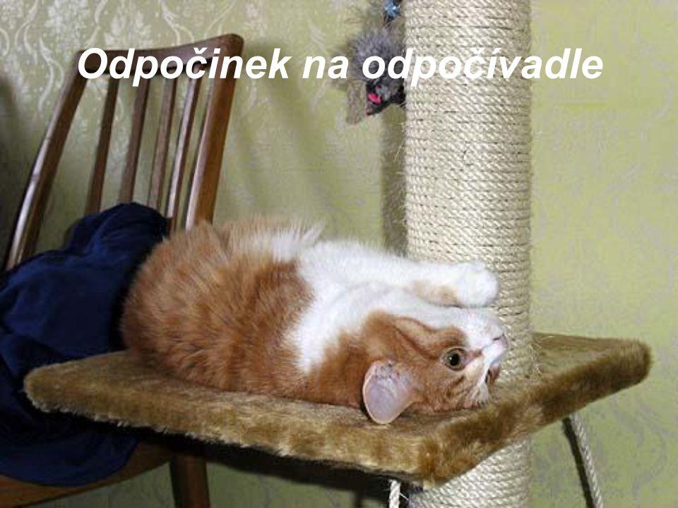 Odpočinek na odpočívadle