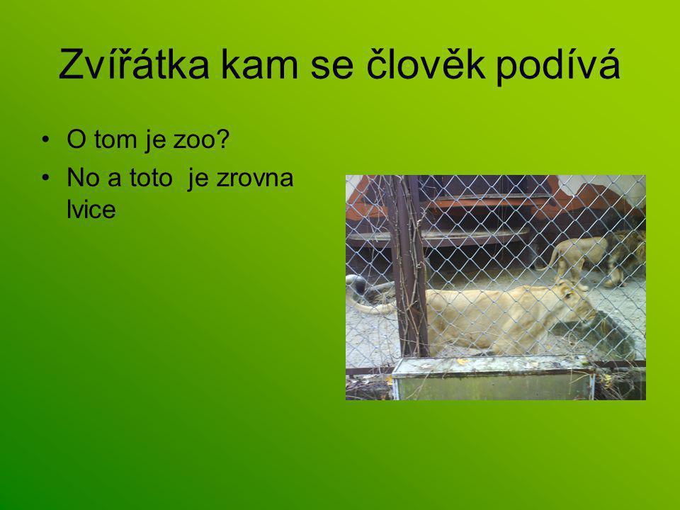 Zvířátka kam se člověk podívá O tom je zoo No a toto je zrovna lvice