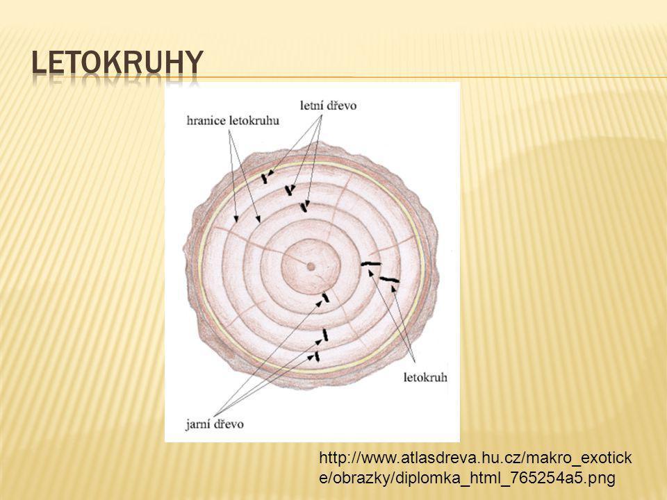 http://www.atlasdreva.hu.cz/makro_exotick e/obrazky/diplomka_html_765254a5.png