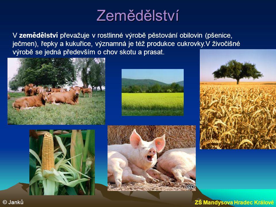 Zemědělství © Janků ZŠ Mandysova Hradec Králové V zemědělství převažuje v rostlinné výrobě pěstování obilovin (pšenice, ječmen), řepky a kukuřice, výz