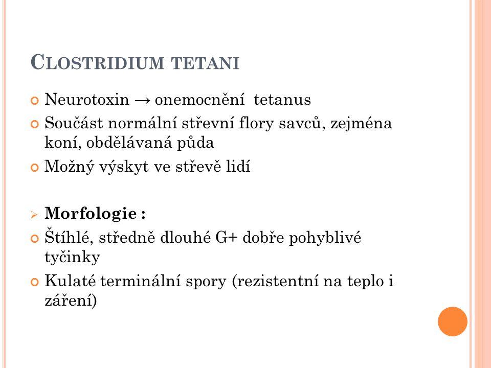 Neurotoxin → onemocnění tetanus Součást normální střevní flory savců, zejména koní, obdělávaná půda Možný výskyt ve střevě lidí  Morfologie : Štíhlé,