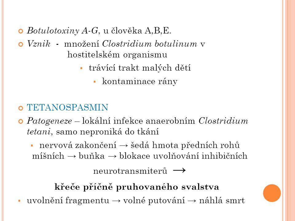 Botulotoxiny A-G, u člověka A,B,E. Vznik - množení Clostridium botulinum v hostitelském organismu  trávící trakt malých dětí  kontaminace rány TETAN