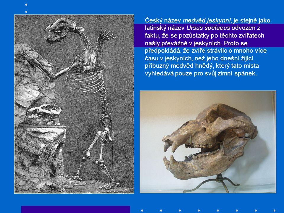 Český název medvěd jeskynní, je stejně jako latinský název Ursus spelaeus odvozen z faktu, že se pozůstatky po těchto zvířatech našly převážně v jesky