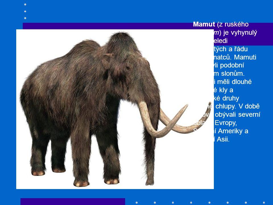 Mamut (z ruského мамонт) je vyhynulý rod z čeledi slonovitých a řádu chobotnatců. Mamuti tedy byli podobní dnešním slonům. Mamuti měli dlouhé zahnuté