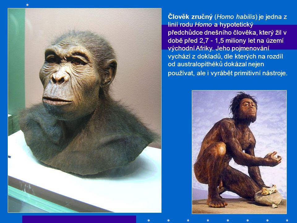 Člověk zručný (Homo habilis) je jedna z linií rodu Homo a hypotetický předchůdce dnešního člověka, který žil v době před 2,7 - 1,5 miliony let na územ