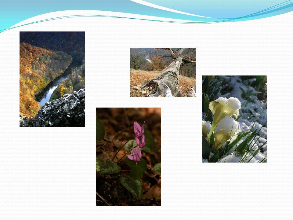 Národní park Šumava Národní park Šumava byl vyhlášen nařízením vlády České republiky dne 20.