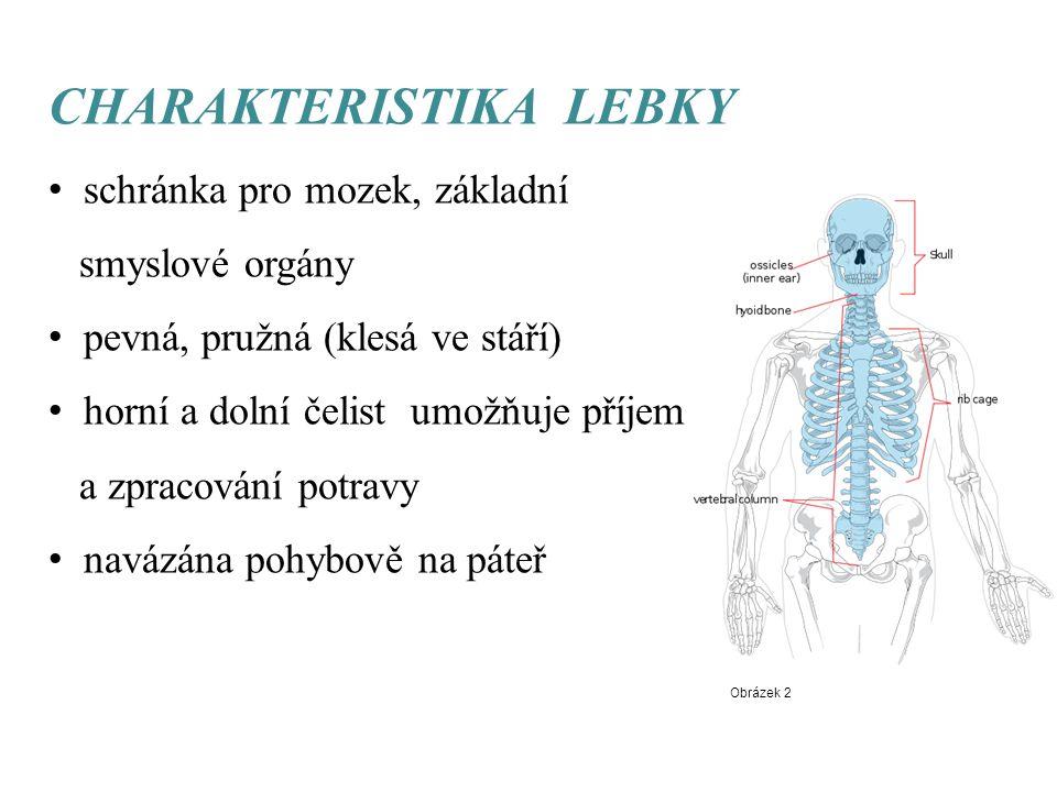 CHARAKTERISTIKA LEBKY schránka pro mozek, základní smyslové orgány pevná, pružná (klesá ve stáří) horní a dolní čelist umožňuje příjem a zpracování po