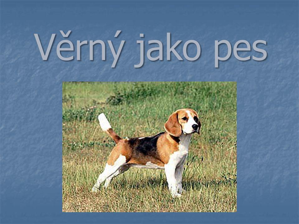 Většina psovitých šelem žije v malých skupinkách, které většinou tvoří jedna rodina, ale někdy se spojují ve smečky.