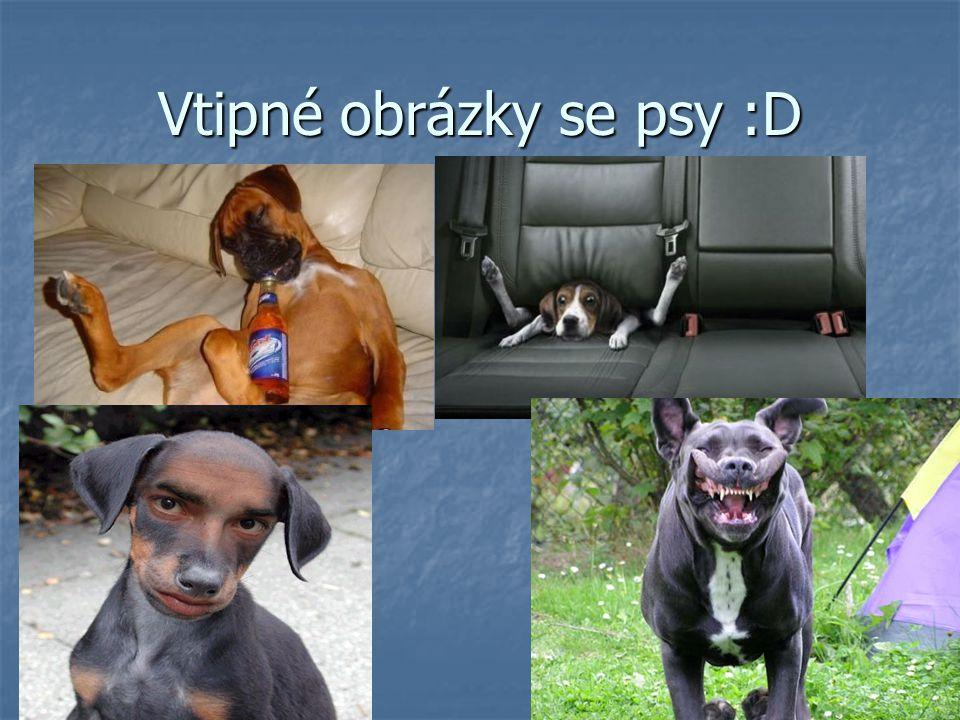 Vtipné obrázky se psy :D