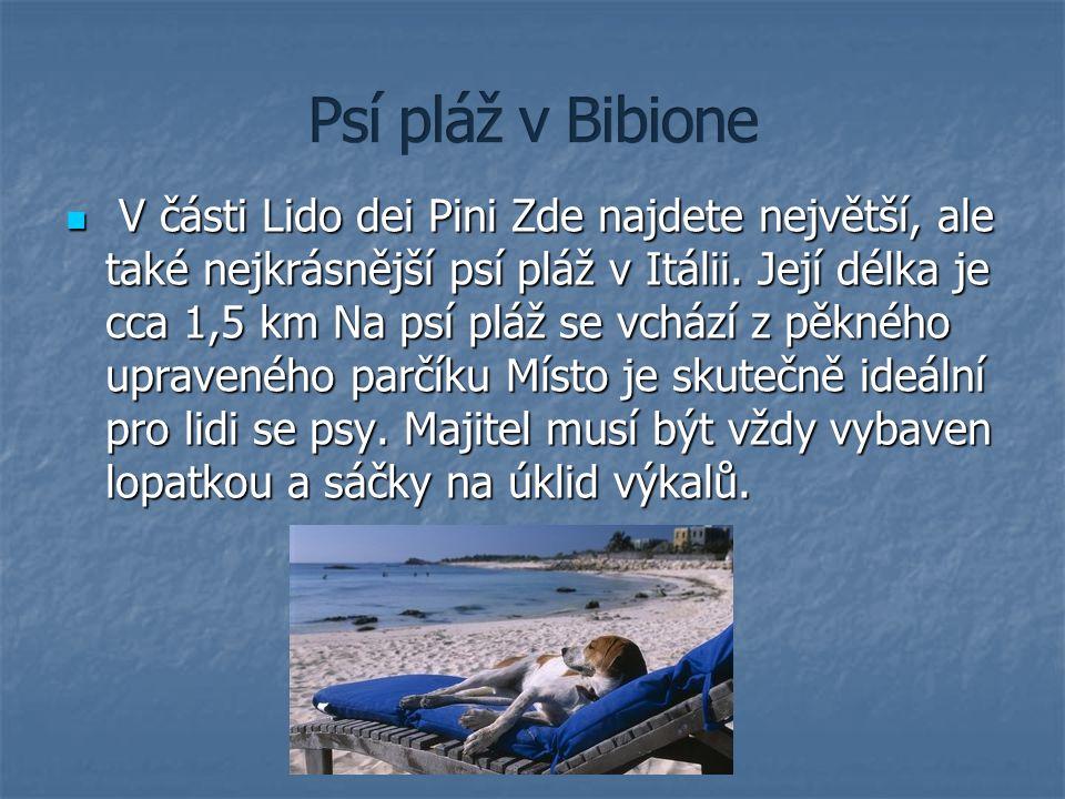V části Lido dei Pini Zde najdete největší, ale také nejkrásnější psí pláž v Itálii. Její délka je cca 1,5 km Na psí pláž se vchází z pěkného upravené