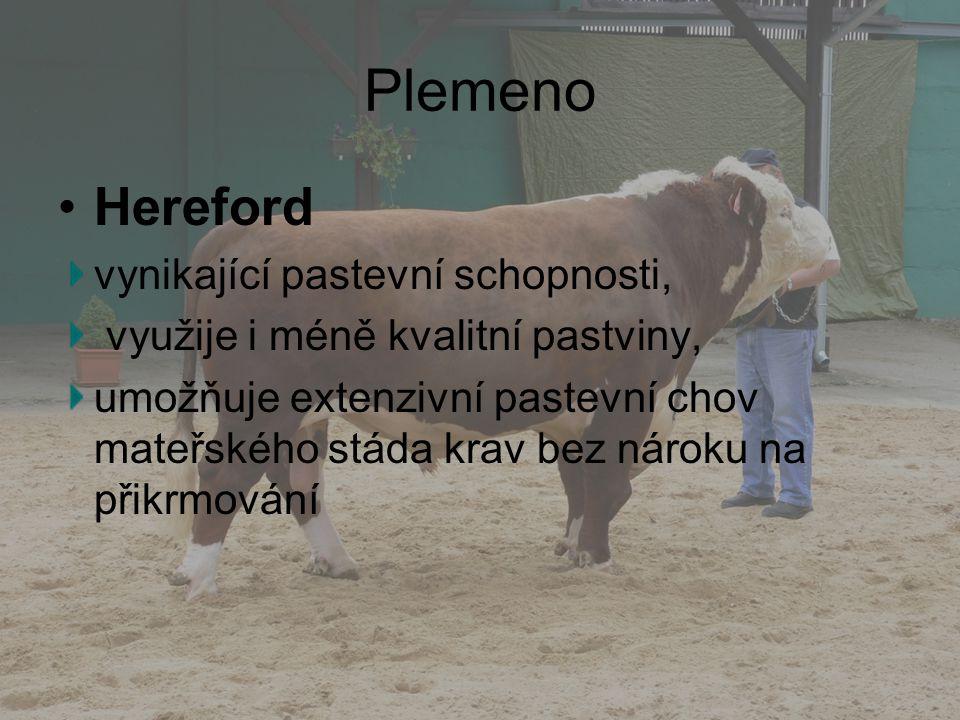 Plemeno Hereford vynikající pastevní schopnosti, využije i méně kvalitní pastviny, umožňuje extenzivní pastevní chov mateřského stáda krav bez nároku