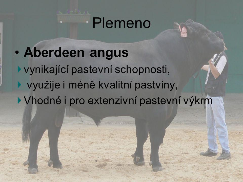 Plemeno Aberdeen angus vynikající pastevní schopnosti, využije i méně kvalitní pastviny, Vhodné i pro extenzivní pastevní výkrm