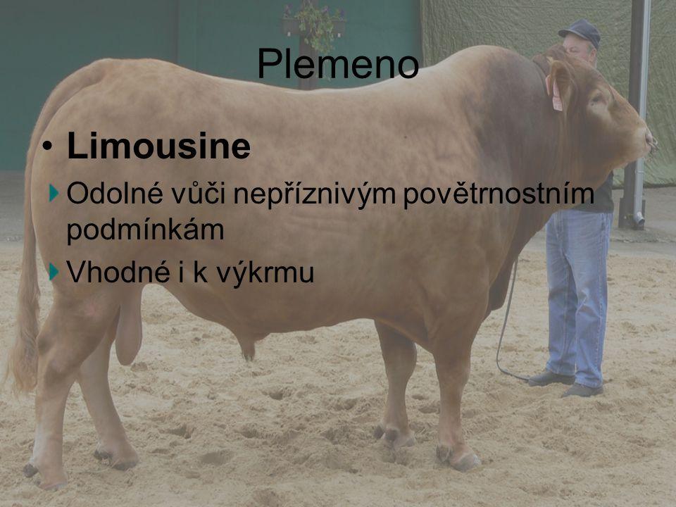 Plemeno Limousine Odolné vůči nepříznivým povětrnostním podmínkám Vhodné i k výkrmu