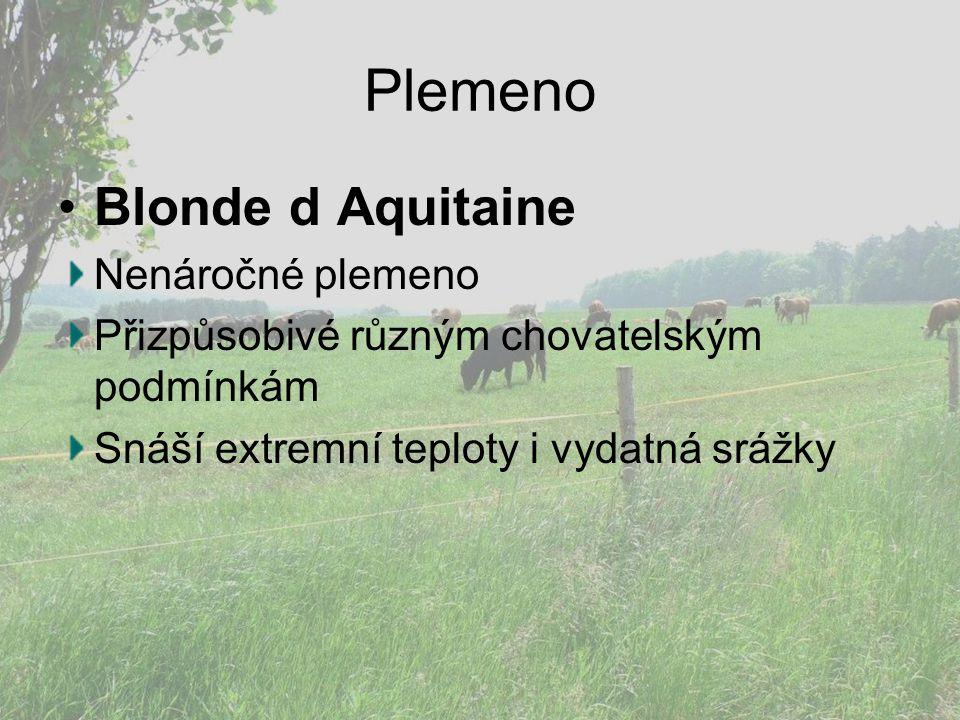 Plemeno Blonde d Aquitaine Nenáročné plemeno Přizpůsobivé různým chovatelským podmínkám Snáší extremní teploty i vydatná srážky