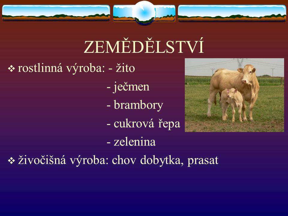 ZEMĚDĚLSTVÍ  rostlinná výroba: - žito - ječmen - brambory - cukrová řepa - zelenina  živočišná výroba: chov dobytka, prasat